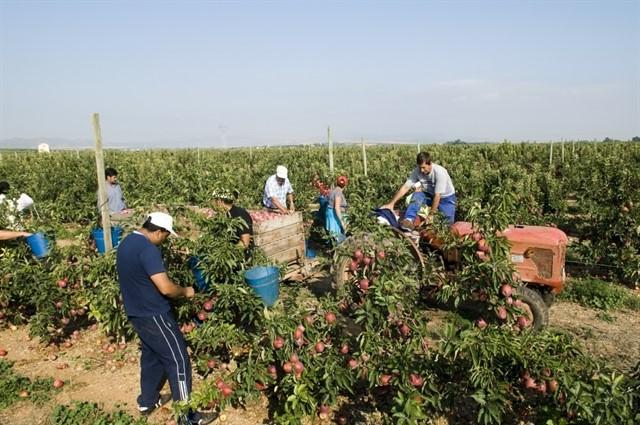 ofertas de empleo campañas agrícolas